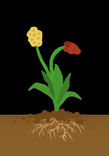 Plant geworteld in de bodem